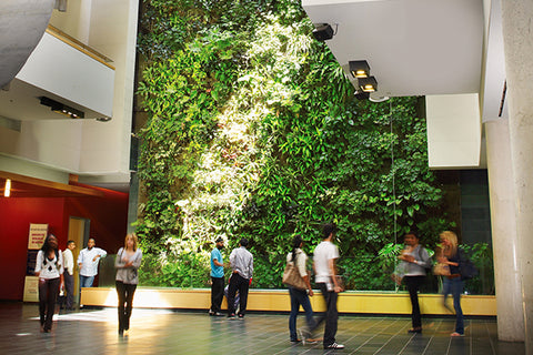 Living wall at the University of Guelph