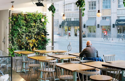 Commercial living wall bringing life to a small cafe