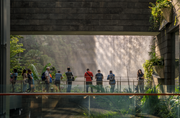 People immersing themselves in a man-made nature environment