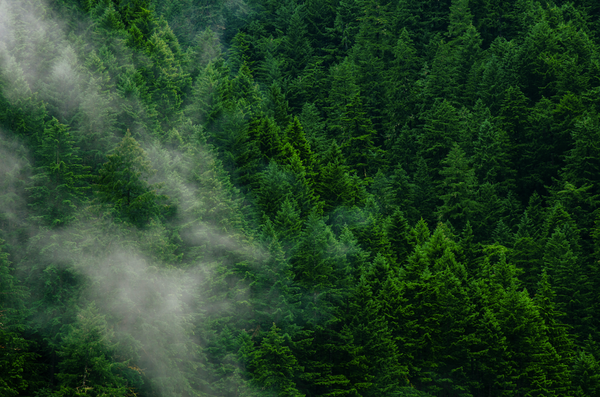Arial view of forest with crisp, clean air
