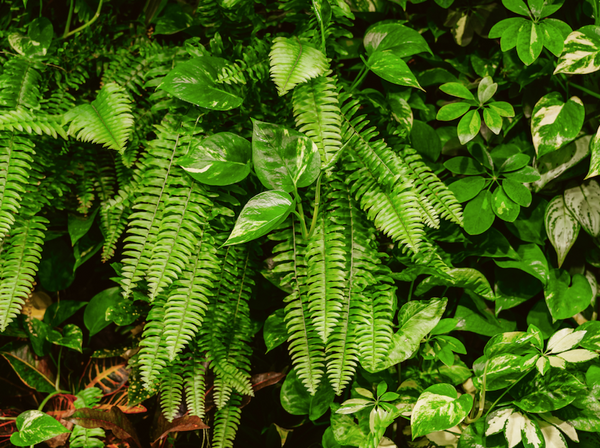 Lots of leafy foliage from a variety of plants