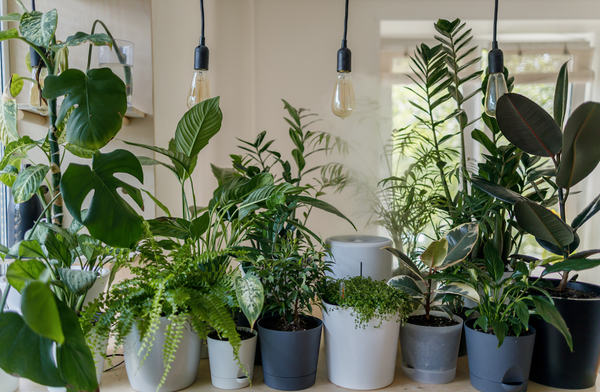A variety of potted houseplants lined up on the counter
