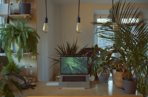 Work-from-home space with plants