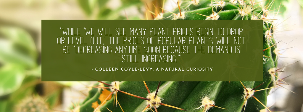 "Quote ""the prices of popular plants will not be decreasing anytime soon because the demand is still increasing"""