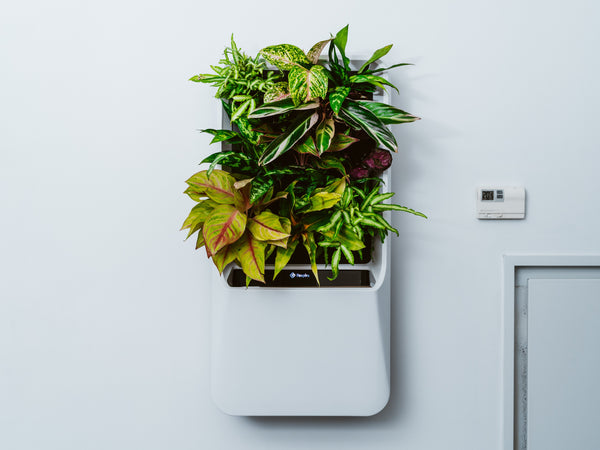 White Respira unit hanging on wall with vibrant plants