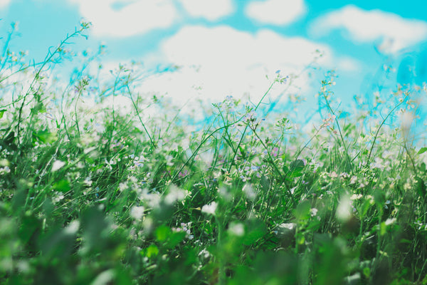 Spring time scene; grass and flowers blowing in the wind