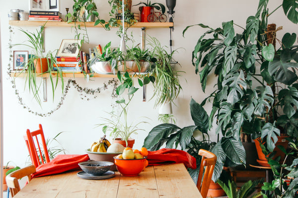 Hygge home filled with plants