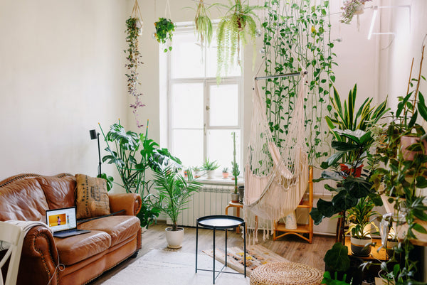 Boho-style living area abundant with various plants