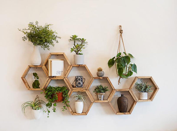 Wooden hexagon shaped wall decor holding a selection of planters and plants