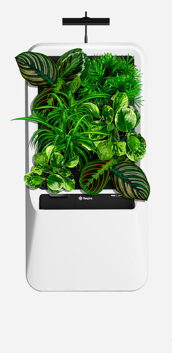 White Respira unit with Pet-Friendly plant palette, and energy efficient LED grow light.
