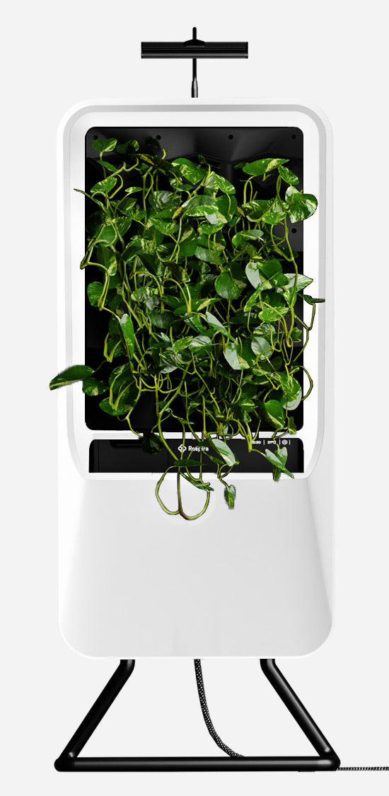 White Respira unit with Pothos plant palette, stainless steel stand, and energy efficient LED grow light