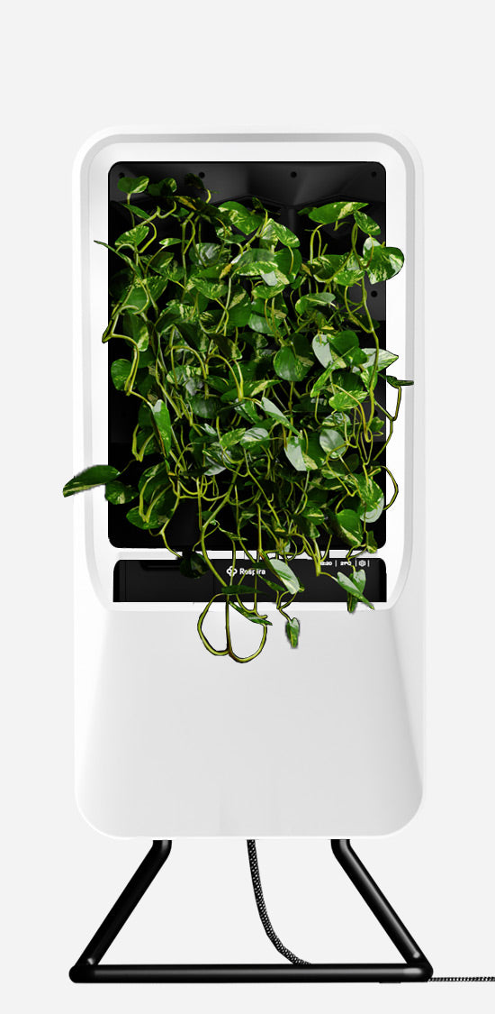 White Respira unit with Pothos plant palette, stainless steel stand