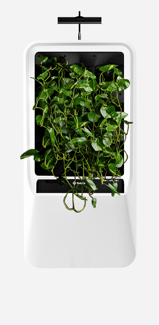 White Respira unit with Pothos plant palette and energy efficient LED grow light