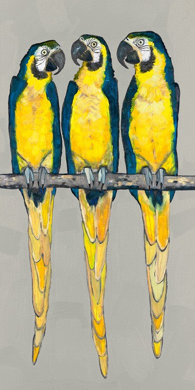 Three Macaws on Gray - Giclée Print