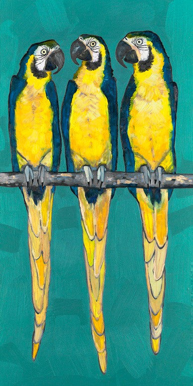 Three Macaws on Turquoise - Giclée Print