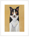 Border Collie in Butter Yellow - Giclée Print