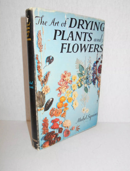 The Art of Drying Plants and Flowers by Mabel Squires (1958, Hardback)