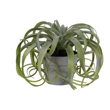 Load image into Gallery viewer, Faux Tillandsia Plant