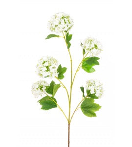 Viburnum Spray White