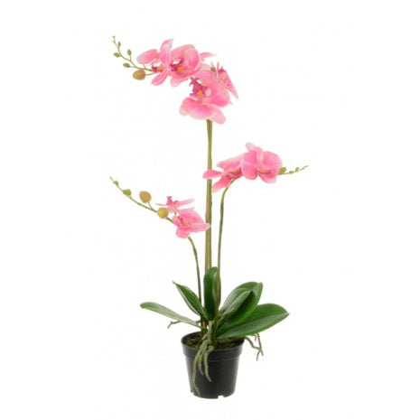 Pink Phalaenopsis in Black Pot