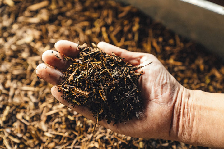 What is Hojicha?