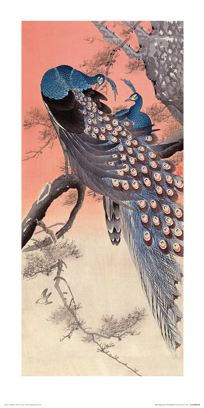 Ohara Koson (Two Peacocks on Tree Branch) 50cm x 100cm