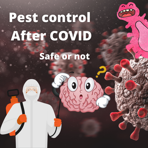 pest control after covid safe or not