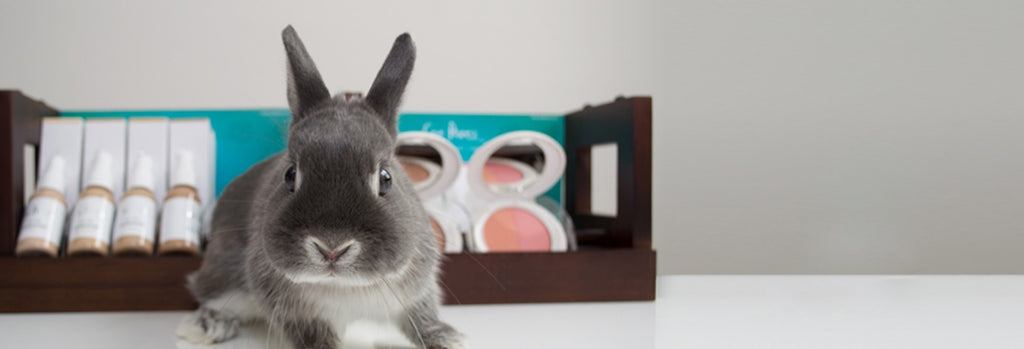 "Choose Cruelty Free: Say ""No"" to animal testing"