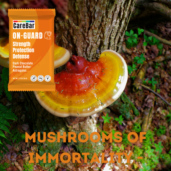 Ingredient Spotlight: Reishi