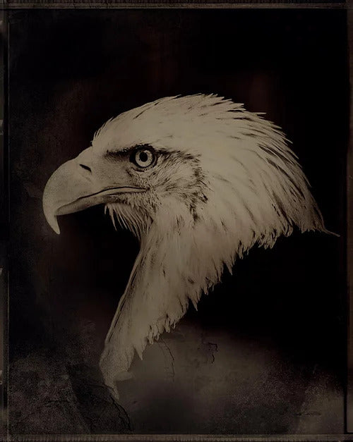 The Eagle by Simon Procter