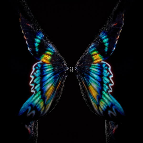 Giuliano Bekor - Butterfly or breast