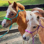 Mini-Pony Braided 4 Knot Halter
