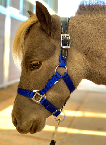 Mini-Pony Dual Buckle Stable Halter