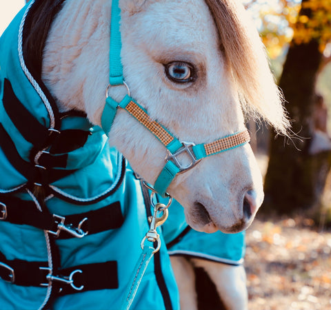 Mini-Pony Bling Halters