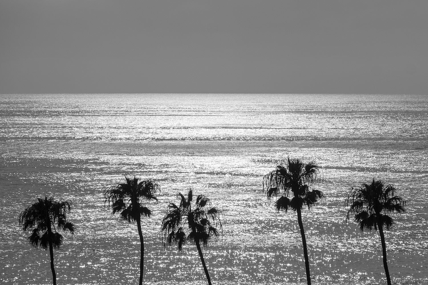 A silhouette monochrome of five palm trees in front of a sunlit sea at La Jolla, San Diego, California.