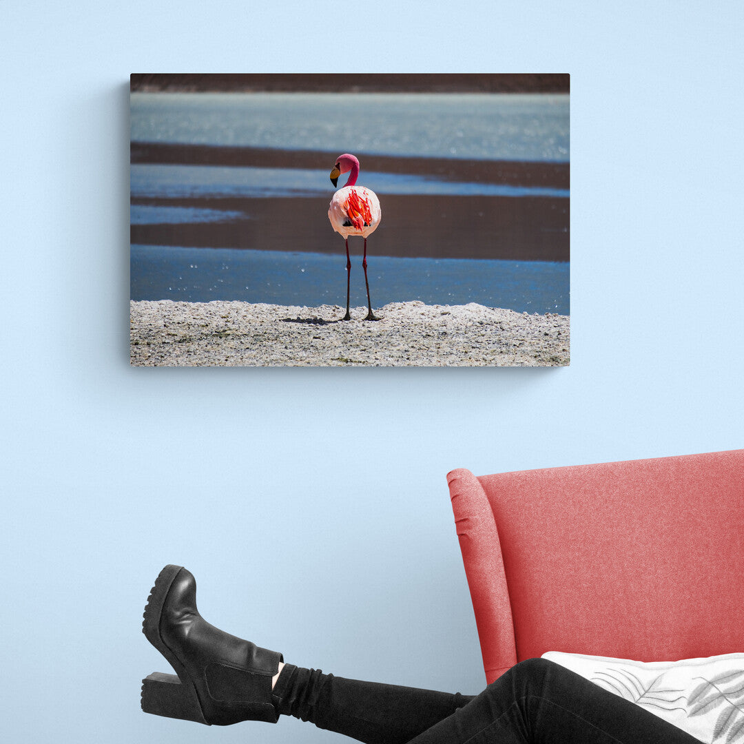Lone Pink Flamingo standing on the edge of a blue lake near the Salt Flats, Uyuni, Bolivia. Printed on Aluminium on a wall