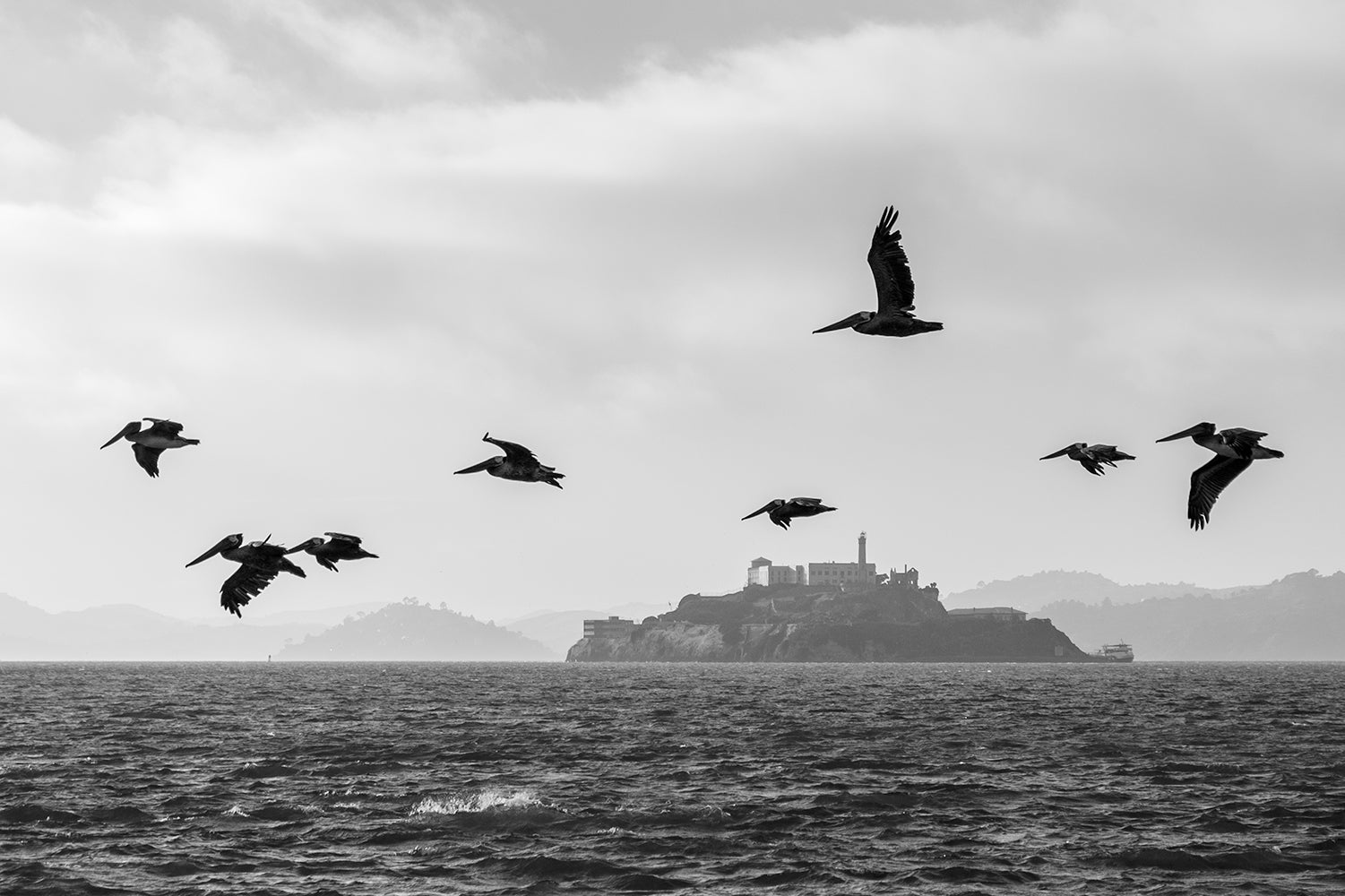 A black and white image of Pelicans flying with Alcatraz highlighted in the background and across the water.