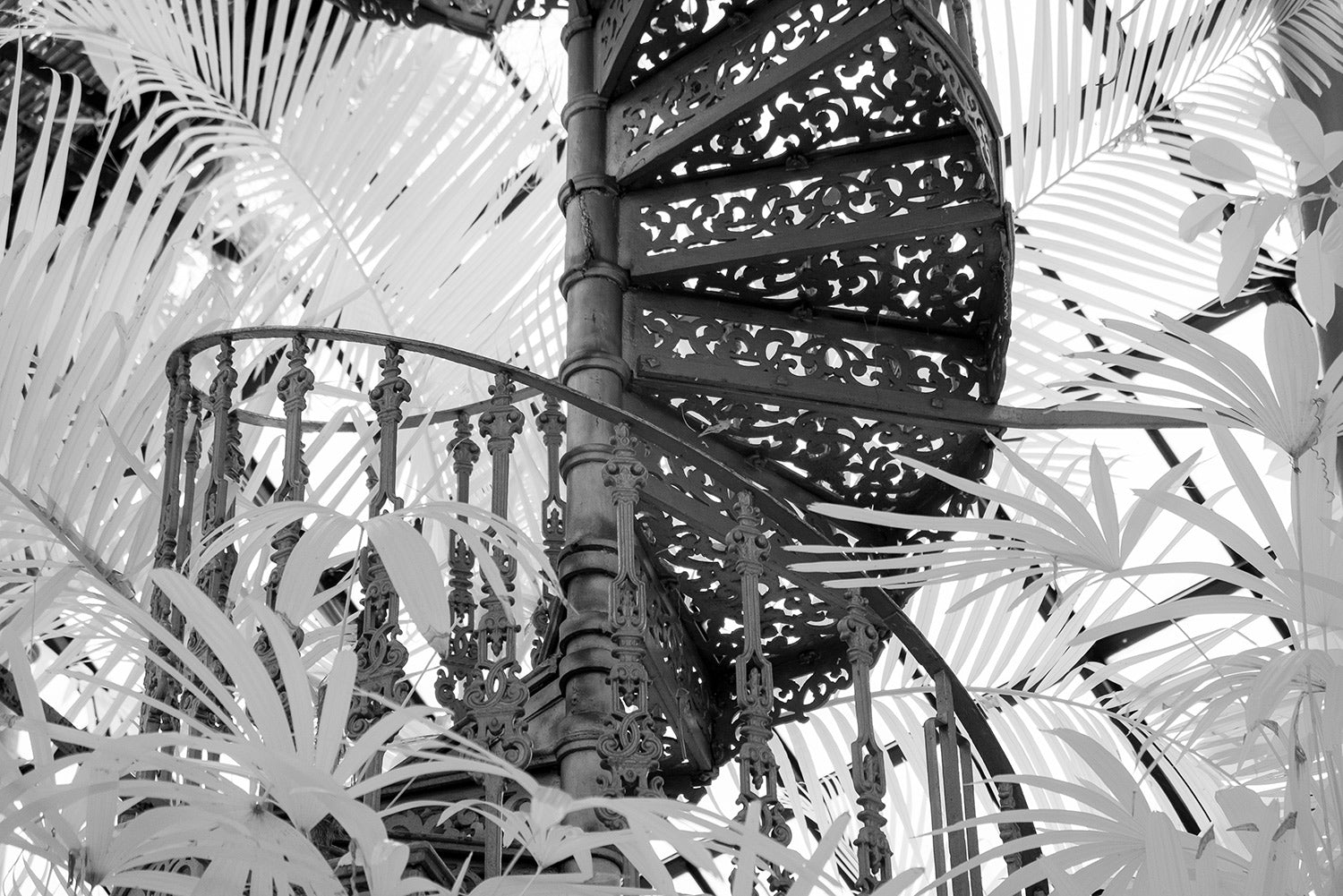 an infrared photograph of a Victorian spiral staircase situated in the Botanical gardens in Glasgow surrounded by fronds.