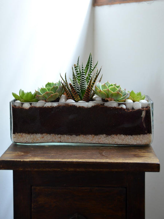 Rectangular Open Terrarium