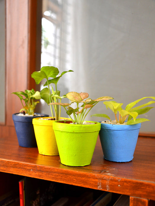 Indoor Plants in Clay Pots (Set of 4)