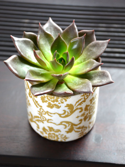Succulent in Decoupaged Glass Pot