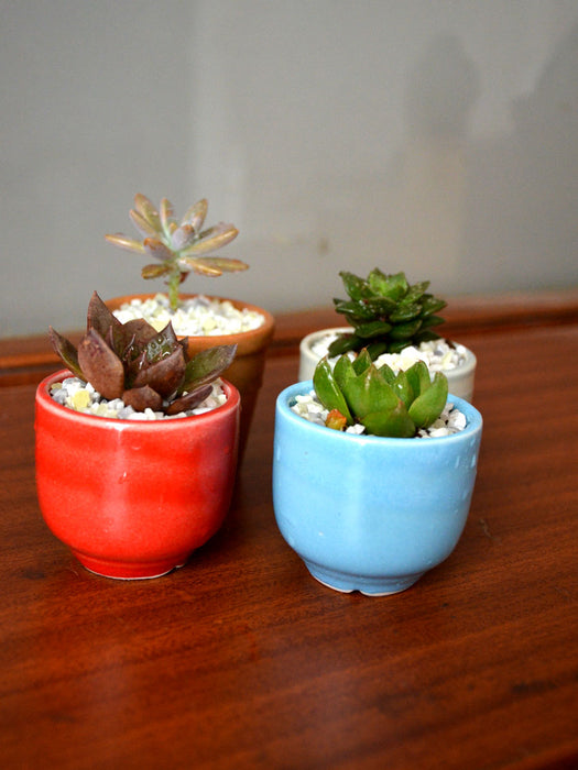 Succulents in Ceramic Pots (Set of 4)