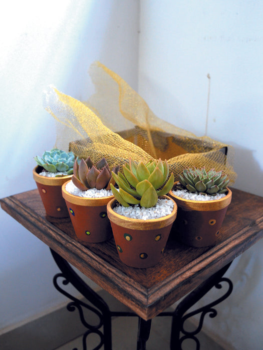 Green Gift Hamper (Set of 4 Succulents)