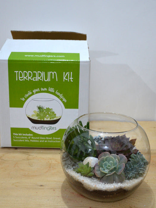 Do-it-Yourself - DIY-  Terrarium Kit (8 Inches)