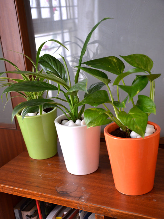 Tricolor Indoors (Set of 3)