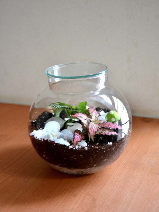 Round Colored Terrarium