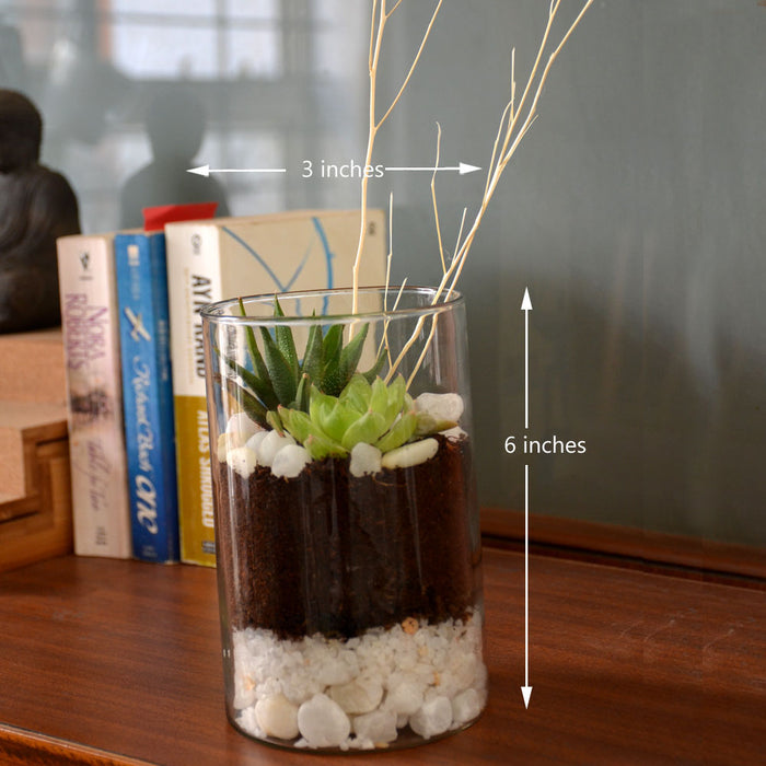 Cylinder Terrarium Glass Bowl