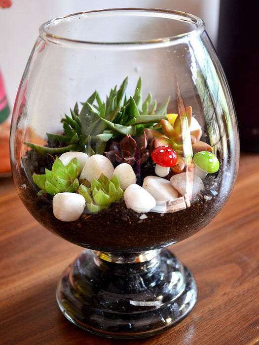 Wine Goblet Terrarium (8 Inches)