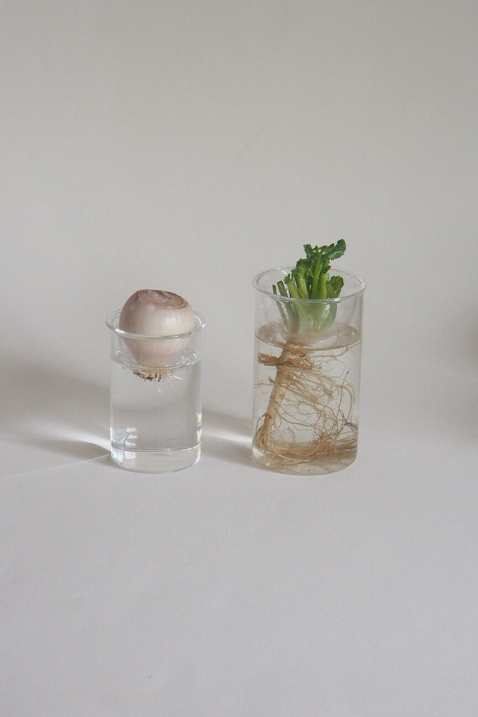 Hydroponic Glass Bulb 'Forcing' Vase - Large - Kura Studio