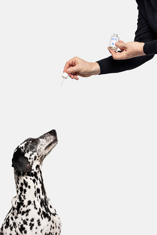 Dog fed by Creature Comforts CBD Wellness Oil to tackle the anxiety problem.